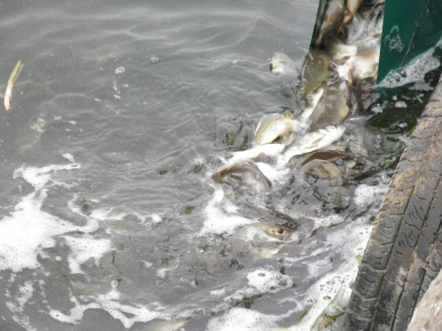 Будем с рыбой, фото-1