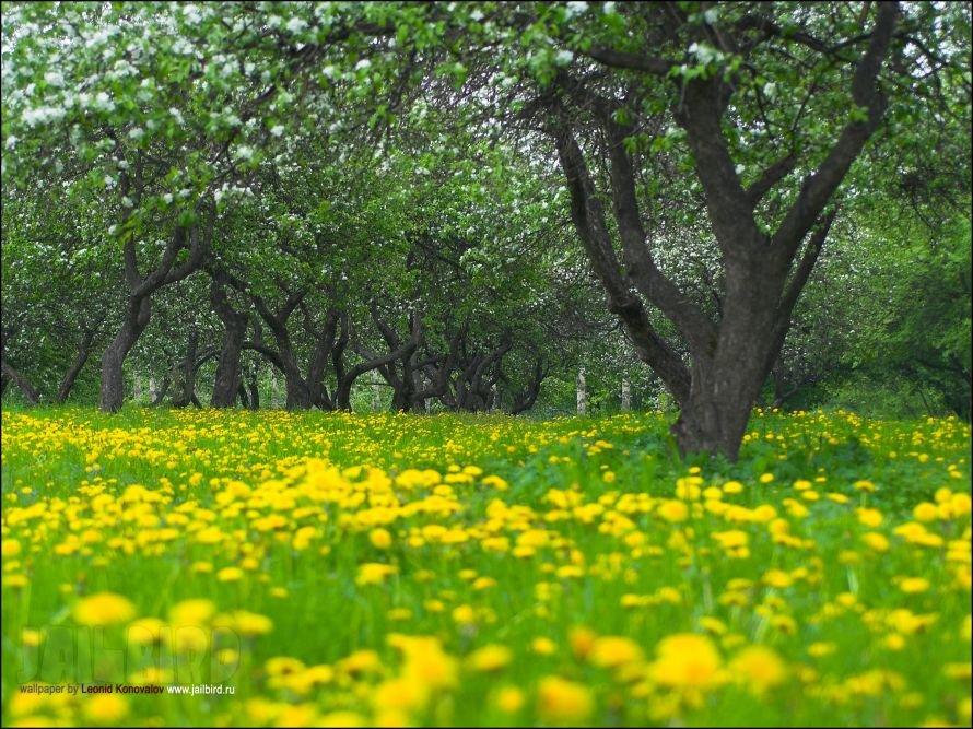FlowersOnDesktop.com_000008