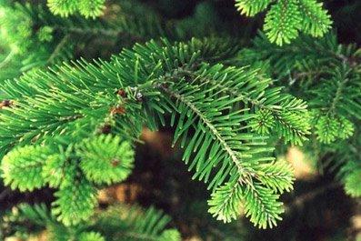 Сколько будут стоить праздничные елки в этом году?, фото-1