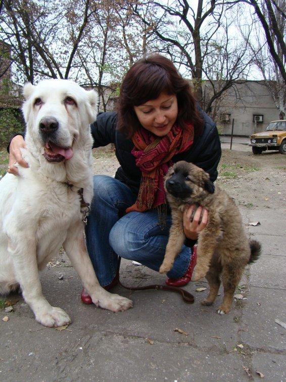Счастливый финал: в Мариуполе зоозащитники приютили беспризорного алабая (ФОТО), фото-4