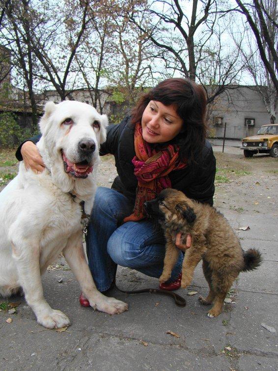 Счастливый финал: в Мариуполе зоозащитники приютили беспризорного алабая (ФОТО), фото-1