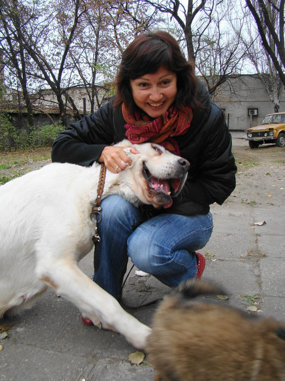 Счастливый финал: в Мариуполе зоозащитники приютили беспризорного алабая (ФОТО), фото-2