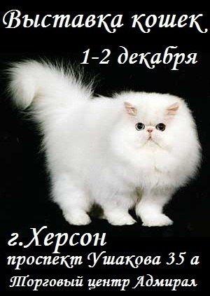 В Херсоне пройдет выставка кошек, фото-1
