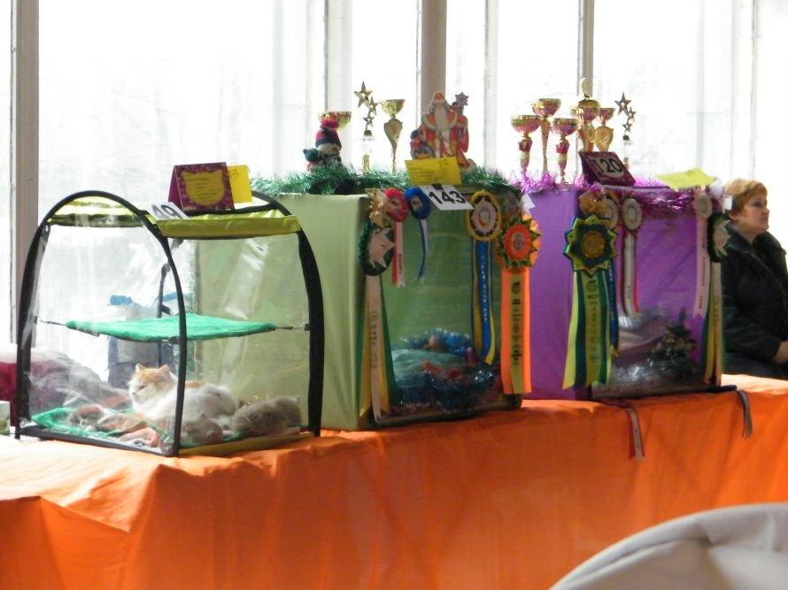В Донецке проходит Международная выставка кошек: среди участников 6 кошек из Горловки., фото-1