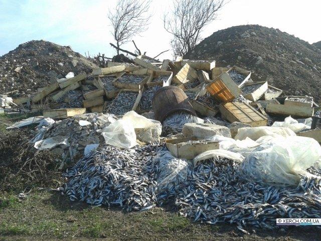 Фотофакт: В Керчи памятник войнам ВОВ завалили хамсой, фото-1