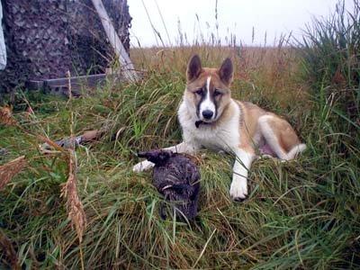 Сегодня в Украине открывается охота на пернатую дичь, фото-1