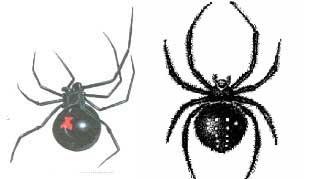 Ядовитые пауки идут в атаку на мариупольцев., фото-1