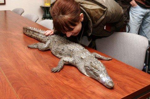 МЧСники не кормят мариупольского крокодила (ФОТО) , фото-1