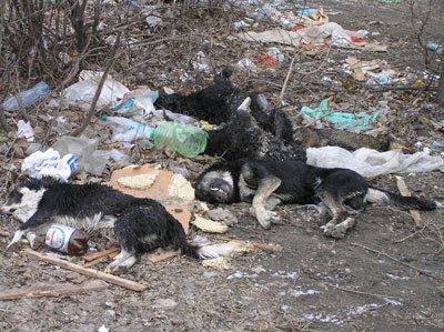 Массовая гибель собак на 17 микрорайоне. Фото, фото-1