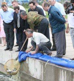Зарыбление реки комбинатом Ильича, фото-1
