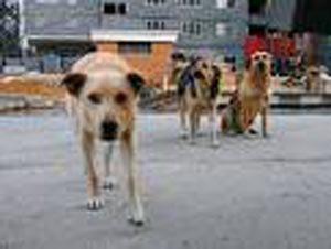 В Мариуполе собак не отстреливают. Их ловят, усыпляют и сжигают, фото-1