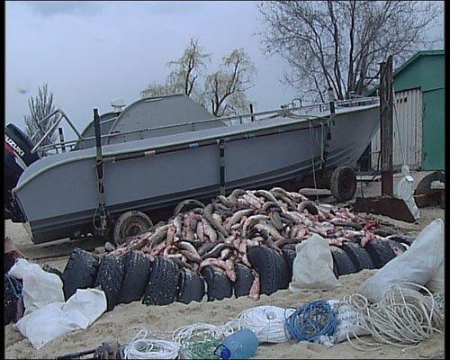 """Безыменский рыбак """"ограбил"""" море на 49 тысяч (Добавлены ФОТО), фото-1"""