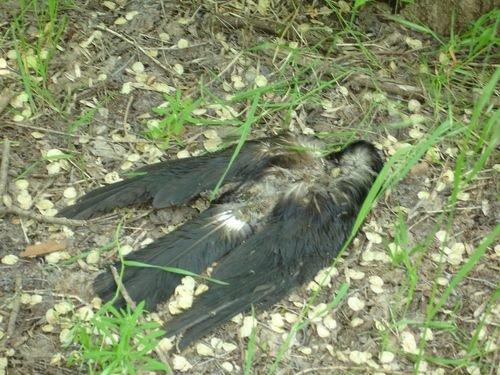 В мариупольском парке — трупы ворон (ФОТО), фото-1