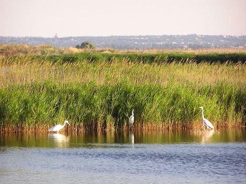 «Меотида» вскоре может получить статус национального природного парка. И новое название – «Козацькі степи» (ФОТО), фото-1