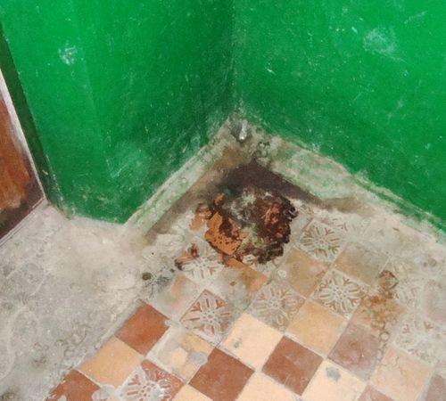 Мариупольские коты  - против жэков и жильцов (ФОТО), фото-1