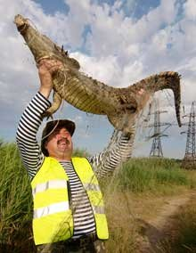 Одесские спасатели расторопнее мариупольских - крокодила поймали за три дня   (ФОТО) , фото-1
