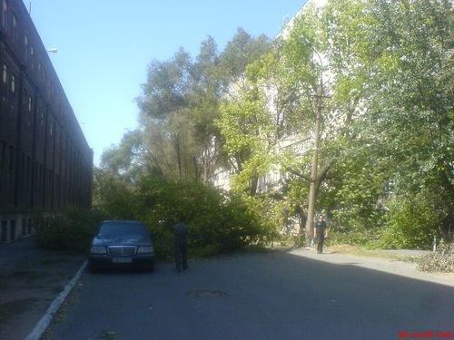 А это фото третьего дерева, упавшего вчера в центре города