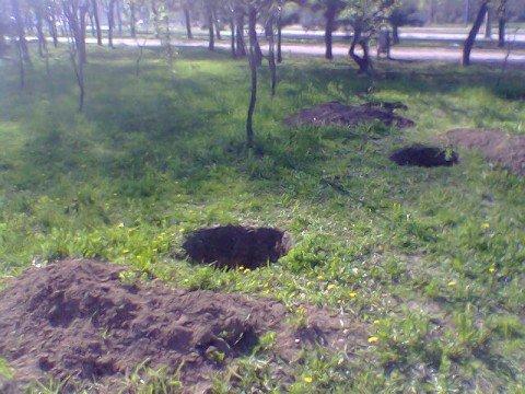 В Мариуполе копают ямы для мифических сосен (ФОТО), фото-1
