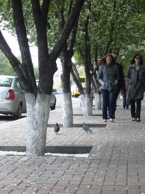 В Мариуполе готовится к выпуску словарь улиц, фото-1
