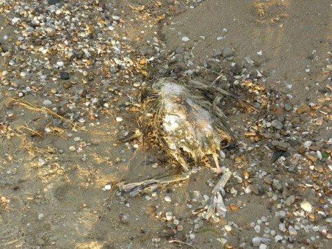 В Мариуполе море выбросило на берег дохлую рыбу и птицу (ФОТО), фото-1