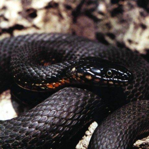 В морской воде на территории мариупольских пляжей резвятся змеи. Безопасные, фото-1