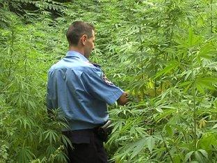 В центре Мариуполя милиция обнаружила плантацию марихуаны (ФОТО), фото-1