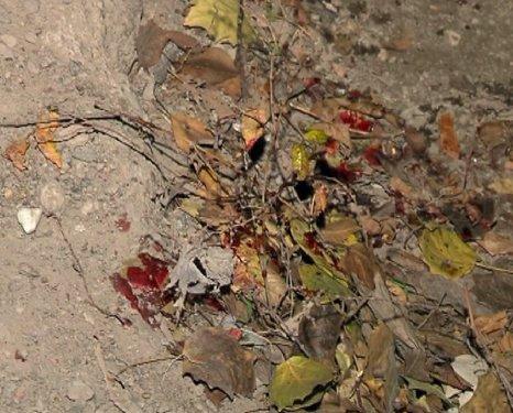11_12_2012 _Маиуполь_Убийство_2s
