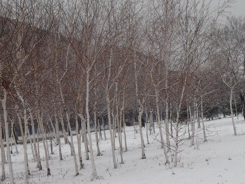 Зима 15