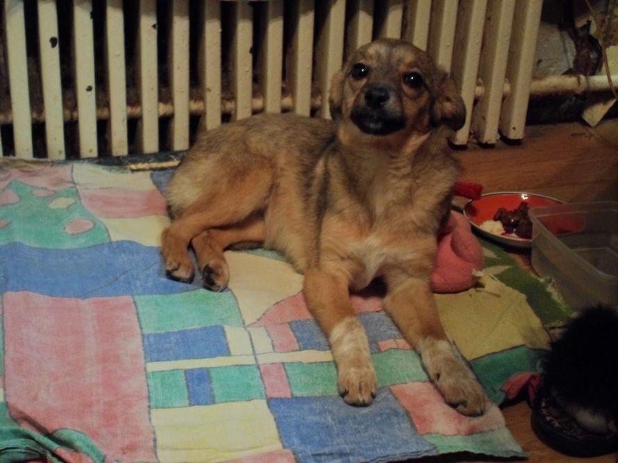 В Мариуполе спасают собаку, сбитую автомобилем (ФОТО), фото-3