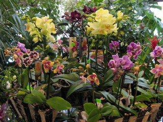 Orhids2012121512