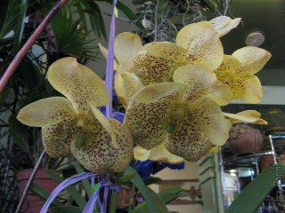 Orhids2012121506