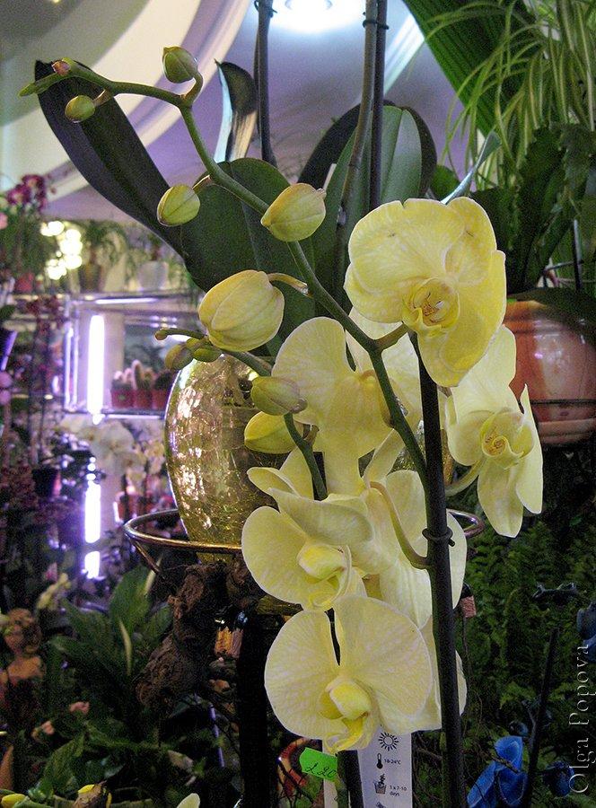 Orhids2012121503