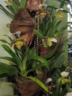 Orhids2012121510