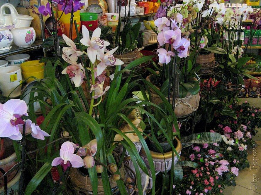Orhids2012121507