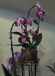 Orhids2012121508