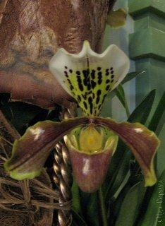 Orhids2012121509