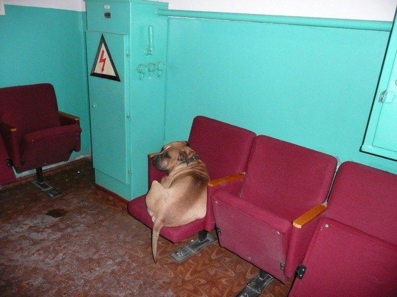 В Мариуполе пса бойцовской породы спасли от мороза и «Коммунальника» (ФОТО), фото-1