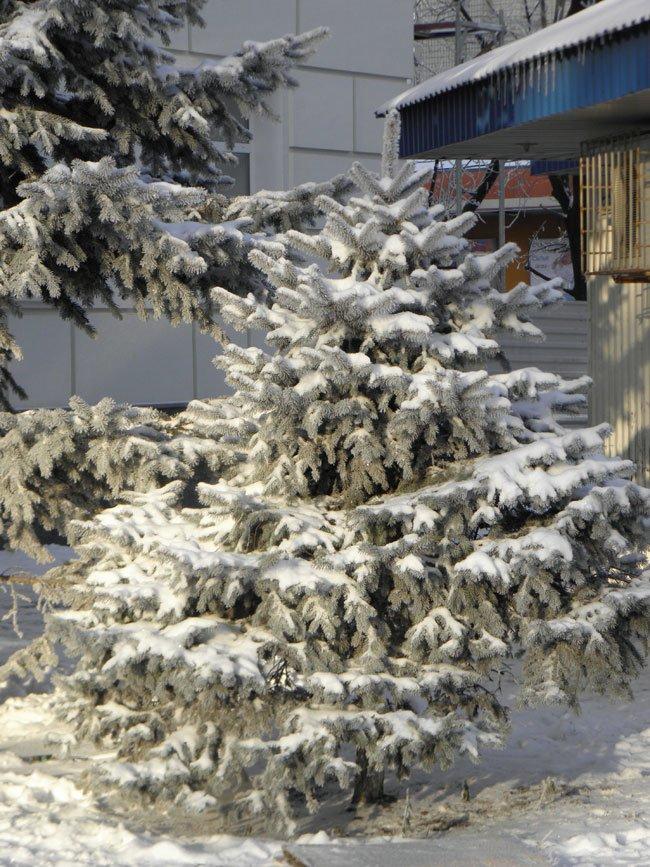снег херсон1