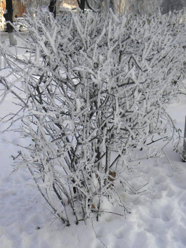 снег херсон7