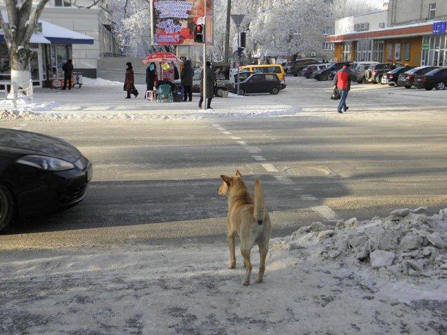 снег херсон11