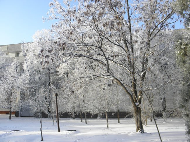 снег херсон8