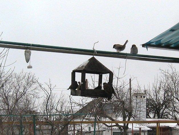 Мариупольцев призывают не кормить птиц хлебом (ФОТО), фото-2
