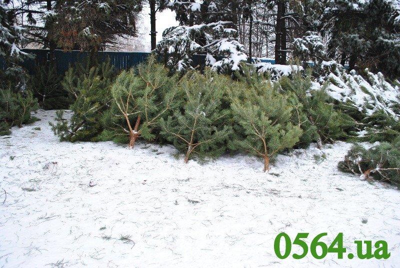 елки 002