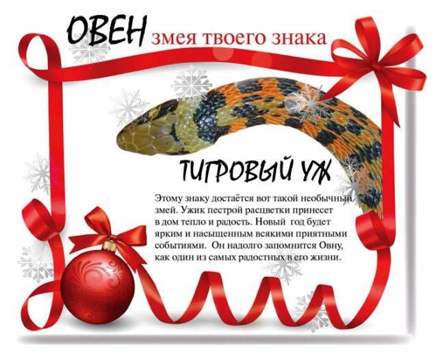 Змея твоего знака: что ожидает вас в 2013 году, фото-1