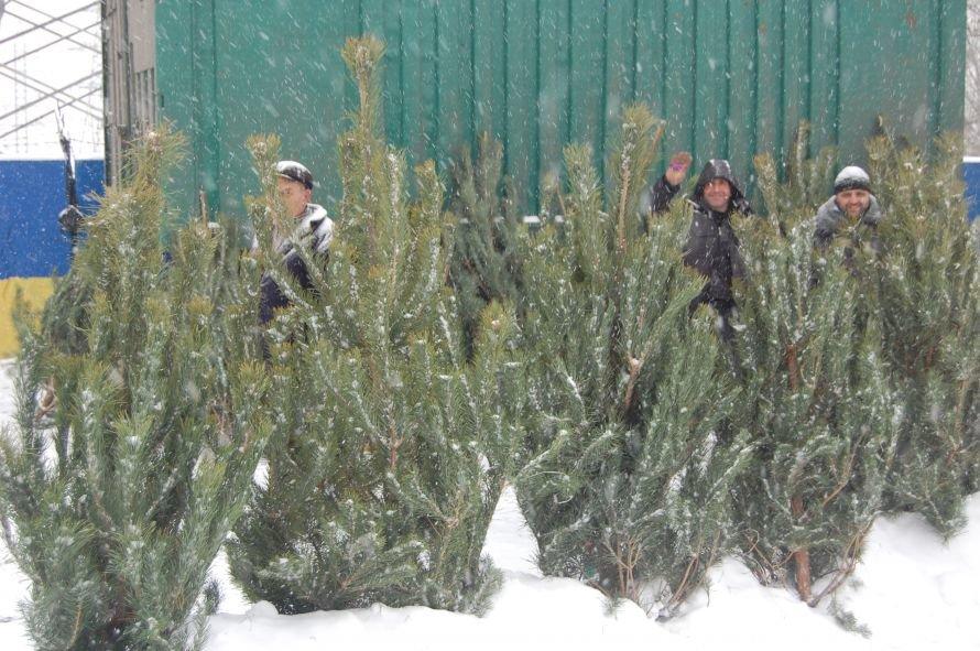 В Днепропетровске проверяли, как и где торгуют елками, фото-1
