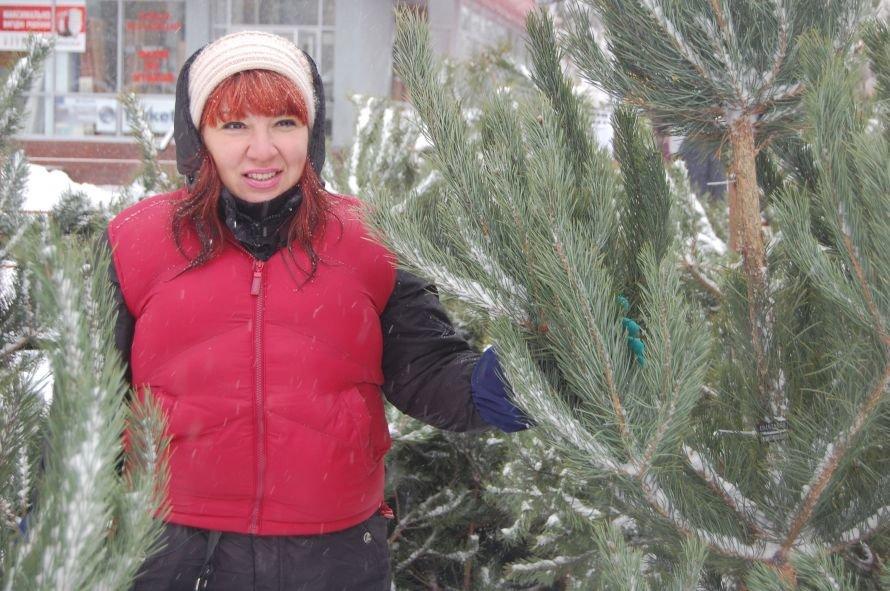 В Днепропетровске проверяли, как и где торгуют елками, фото-3