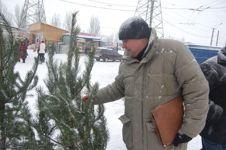 В Днепропетровске проверяли, как и где торгуют елками, фото-4