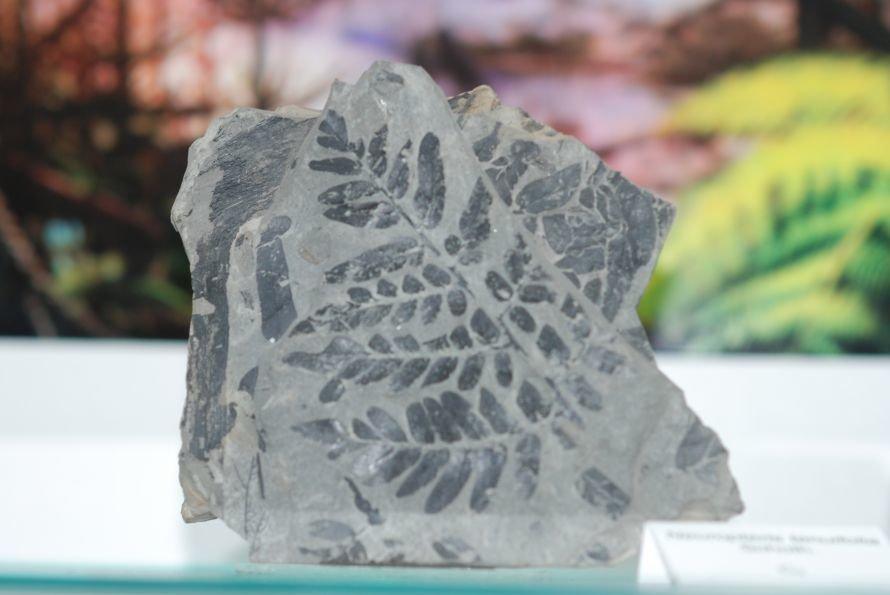 В Луганском университете открылся уникальный музей камней (ФОТО), фото-4