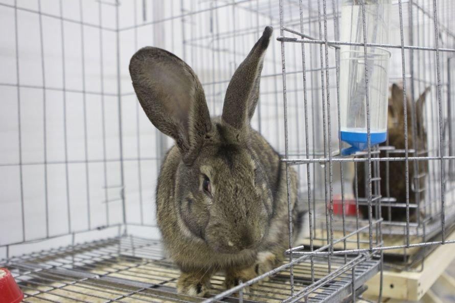 В Чебоксары приехали почти 40 породистых кроликов (ФОТО), фото-1