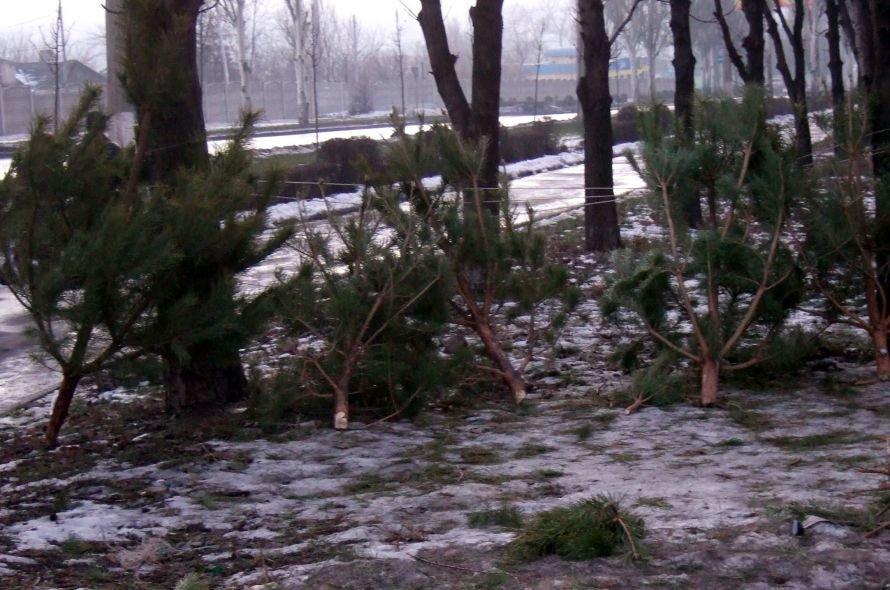 В Донецке на месте елочных базаров остались непроданные брошенные елки (фото), фото-1